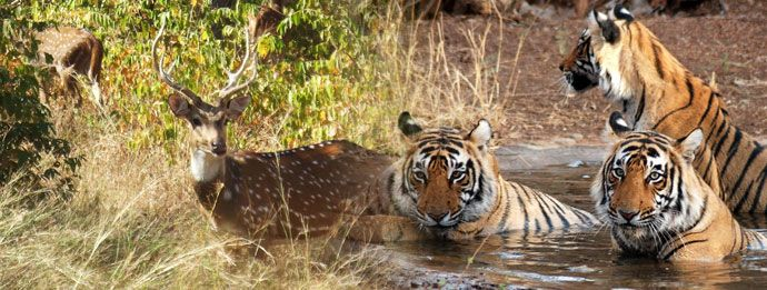 Book Trip to Ranthambore Tour Travel Packages Holidays