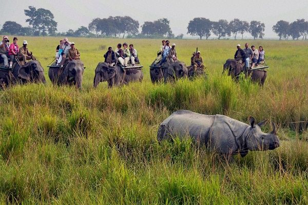 Kaziranga tour packages, Kaziranga holiday packages, ho