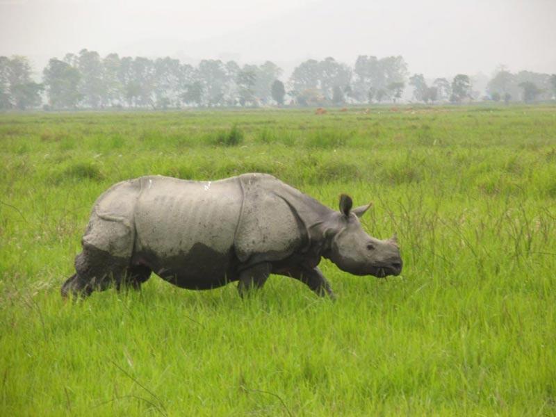 Kaziranga Tours, kaziranga wildlife tour packages, kazi