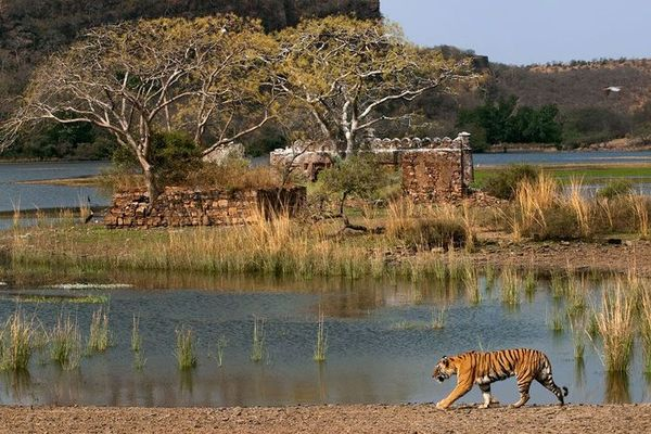 Golden Triangle with Ranthambhore