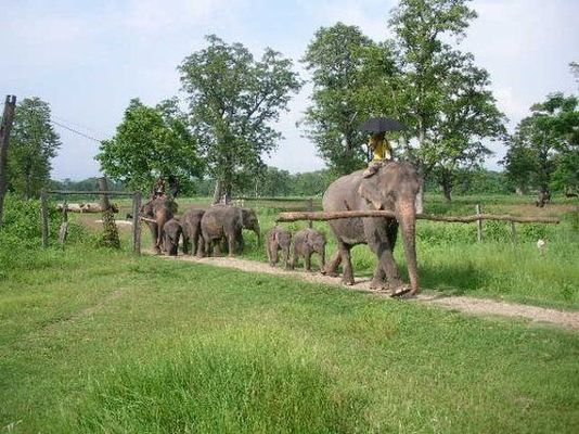 Chitwan tour packages, Chitwan holiday packages, holida