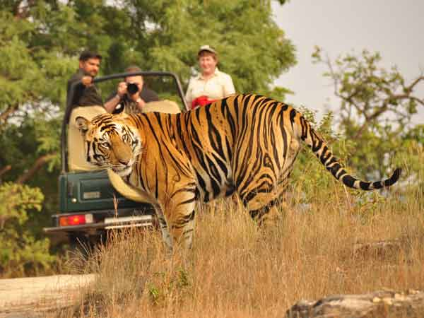 Bandhavgarh tour packages, Bandhavgarh holiday packages