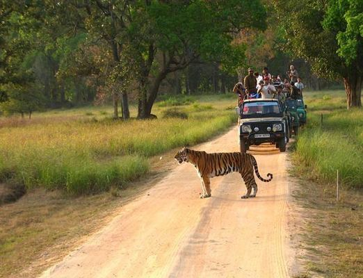 Kanha tour packages, Kanha holiday packages, holidays i