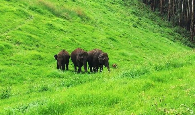 Mysore to Wayanad Holiday Plan Tour Packages
